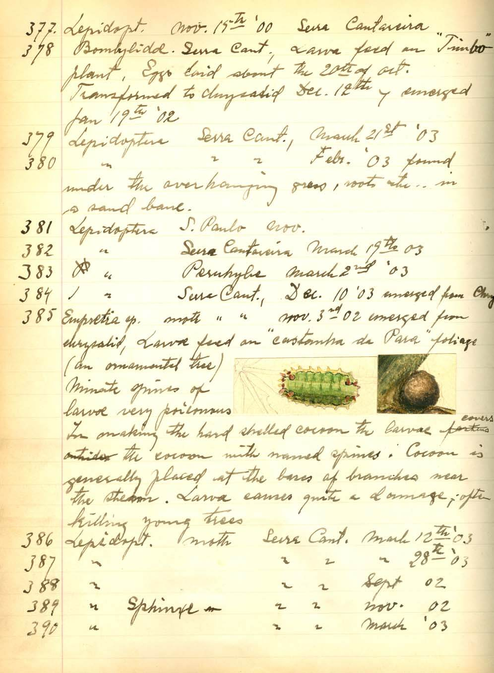 A page of notes from a hand-written lot book showing information associated with specimens collected by A. G. Hammar near Sao Paulo, Brazil, from 1900-1903